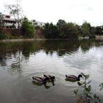 Lago en Sant Vicenç de Montalt