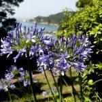 Lloret de Mar, Jardines Santa Clotilde