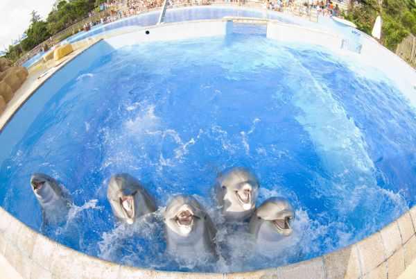 Delfinario de Marineland en La Costa Brava