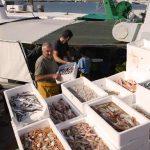 Los pescadores de Cambrils