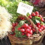 Mercado del Xató de Vilanova i la Geltrú