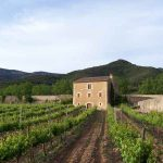 Campos de viñedos del Monasterio de Poblet