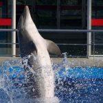 Delfinario en el zoo de Barcelona