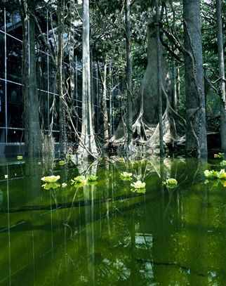 Bosque inundado del Cosmocaixa de Barcelona
