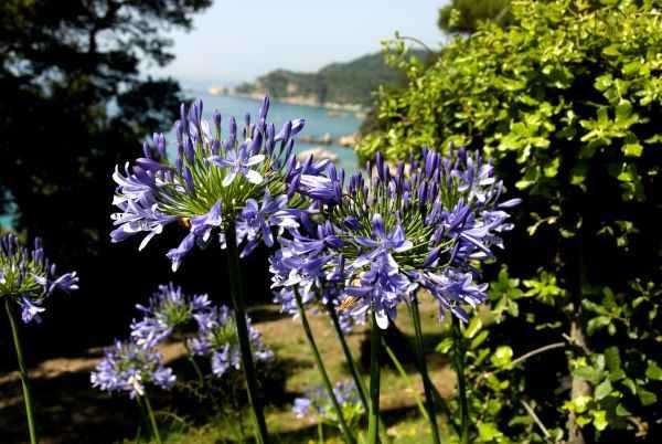 Jardines de Santa Clotilde  Lloret de Mar  Costa Brava  DeMediterràning.com