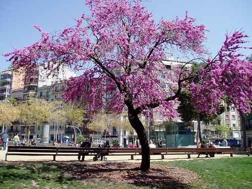 Plaça Joanic en Barcelona