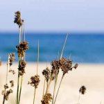 Playas vírgenes de la Costa de Tarragona
