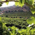 Viñedos en Tarragona