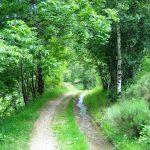 Ruta La Senda del Oso, Pirineo catalán