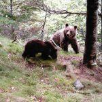 Ecoturismo en el Pirineo catalán