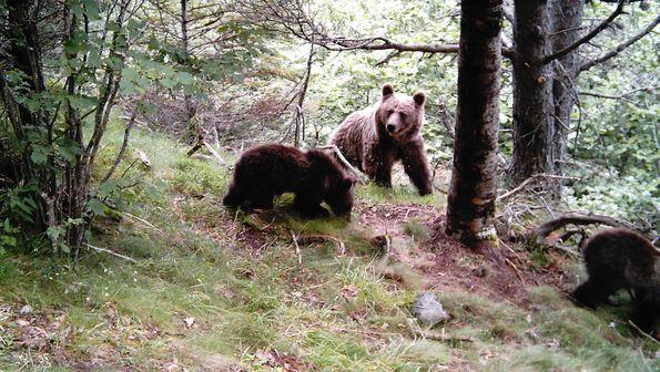 La casa del oso hoteles en el pirineo catal n hoteles - Casas rurales en el pirineo catalan ...