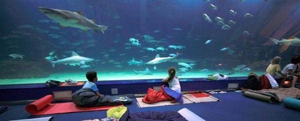 Dormir con tiburones, Oceanogràfic de Valencia