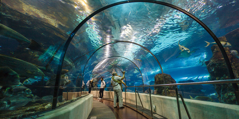 Ofertas Hotel + Entradas Aquarium Barcelona