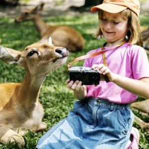 Descubre los 5 mejores parques de animales en España
